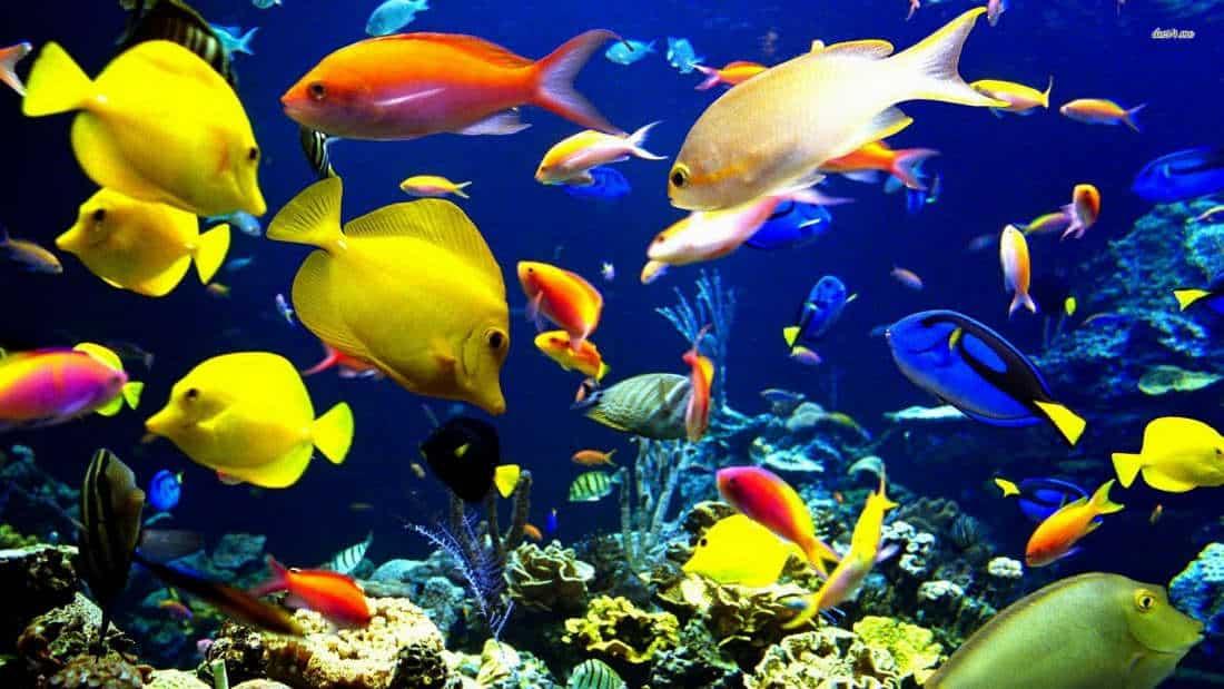 History-of-fish