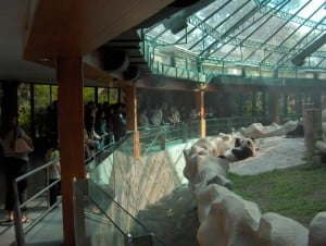 Panda_enclosure_at_Chiang_Mai_zoo-KayEss-2