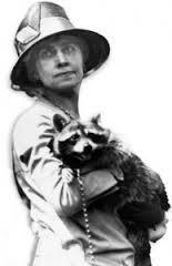 coolidge-racoon