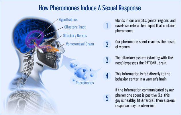how pheromones work